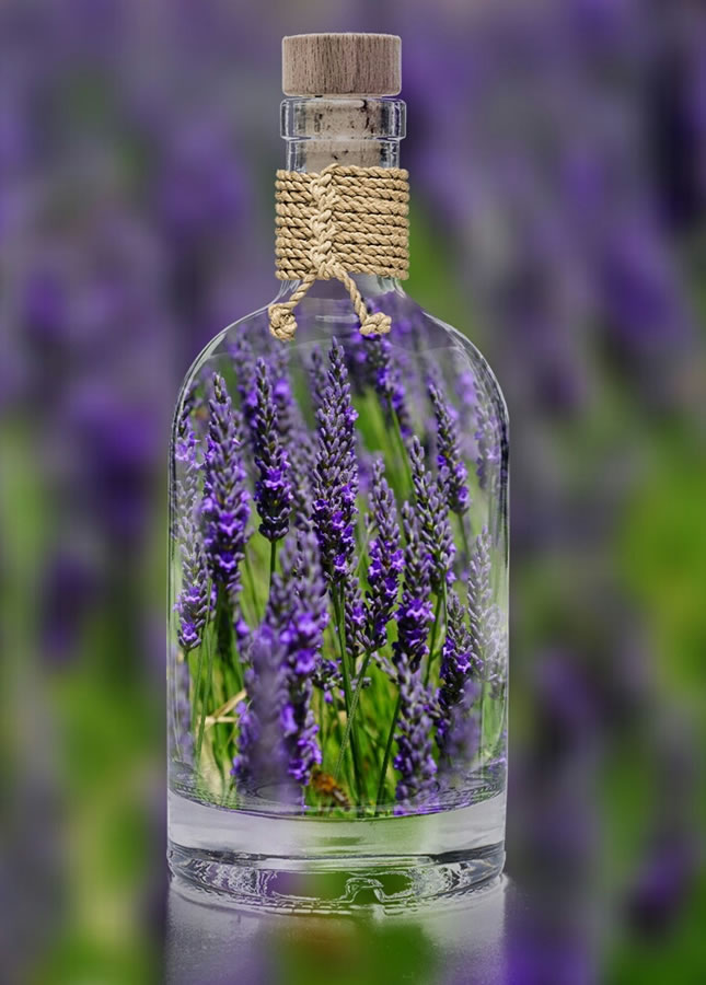 Lavender Farm Prince Edward County